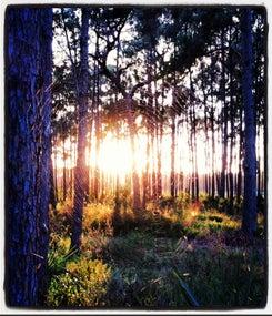 Editor's Corner: Lost in the Woods