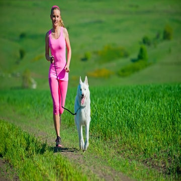 How Different Dog Breeds Fare As Running Partners