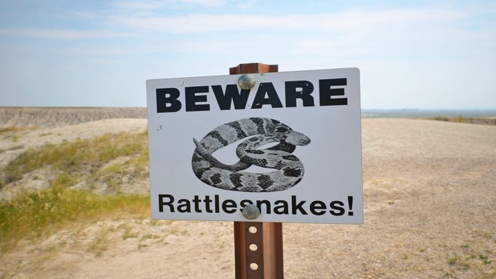8 Snake Safety Tips For Trail Runners