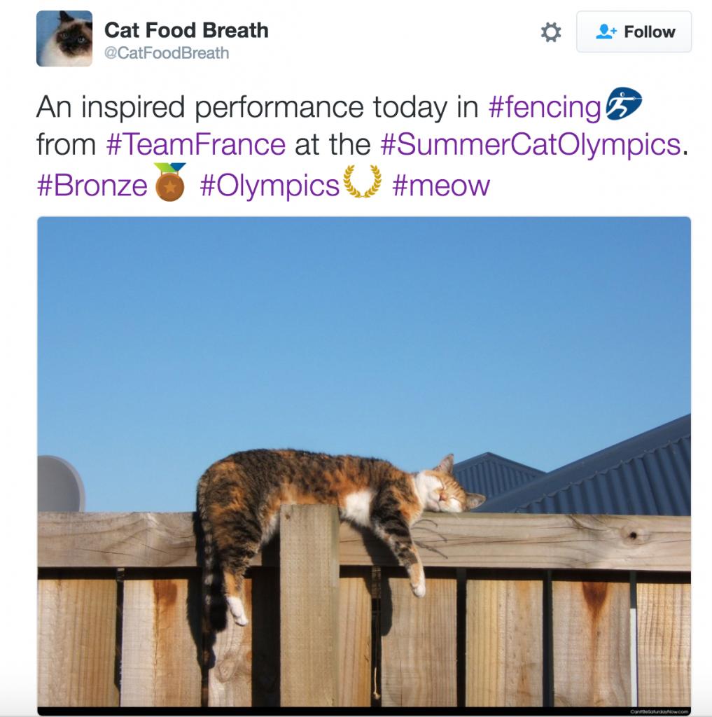Fencing_Cat Olympics