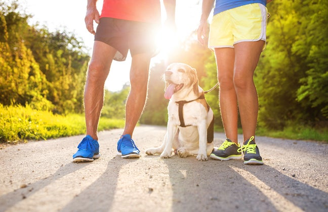 runners and dog