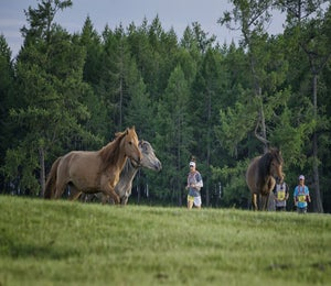 This Race Lets You Run With Horses