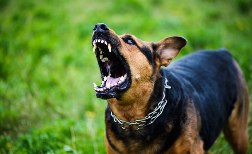 What Should You Do If A Dog Attacks?