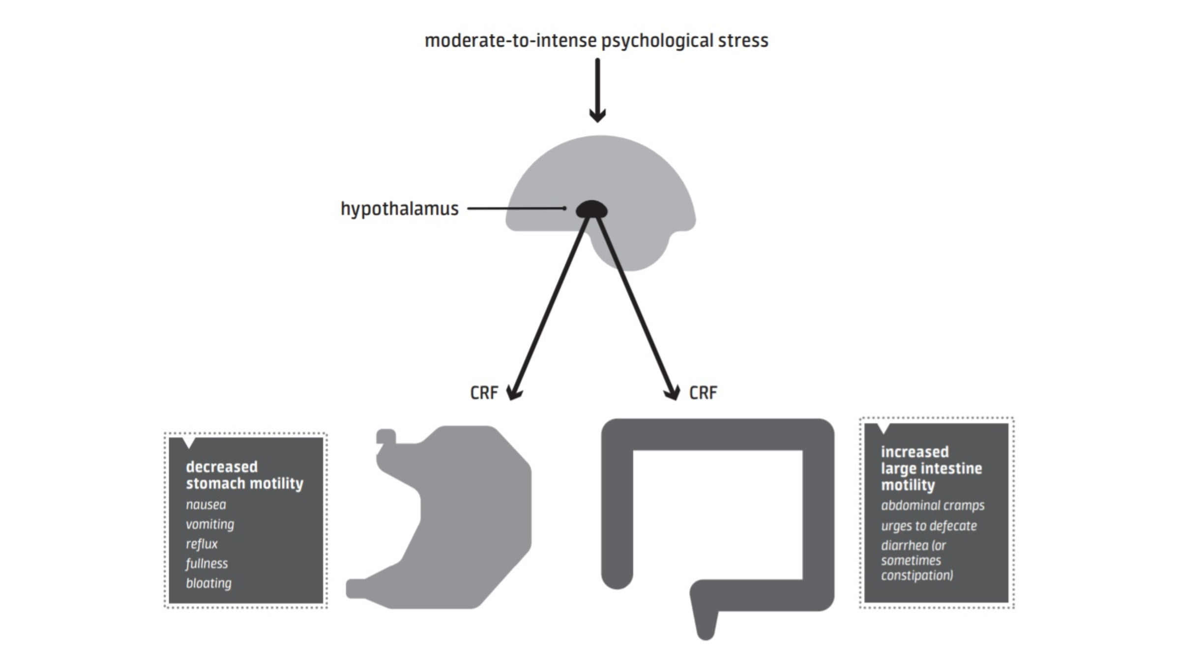 Illustration on how acute stress affects the gut