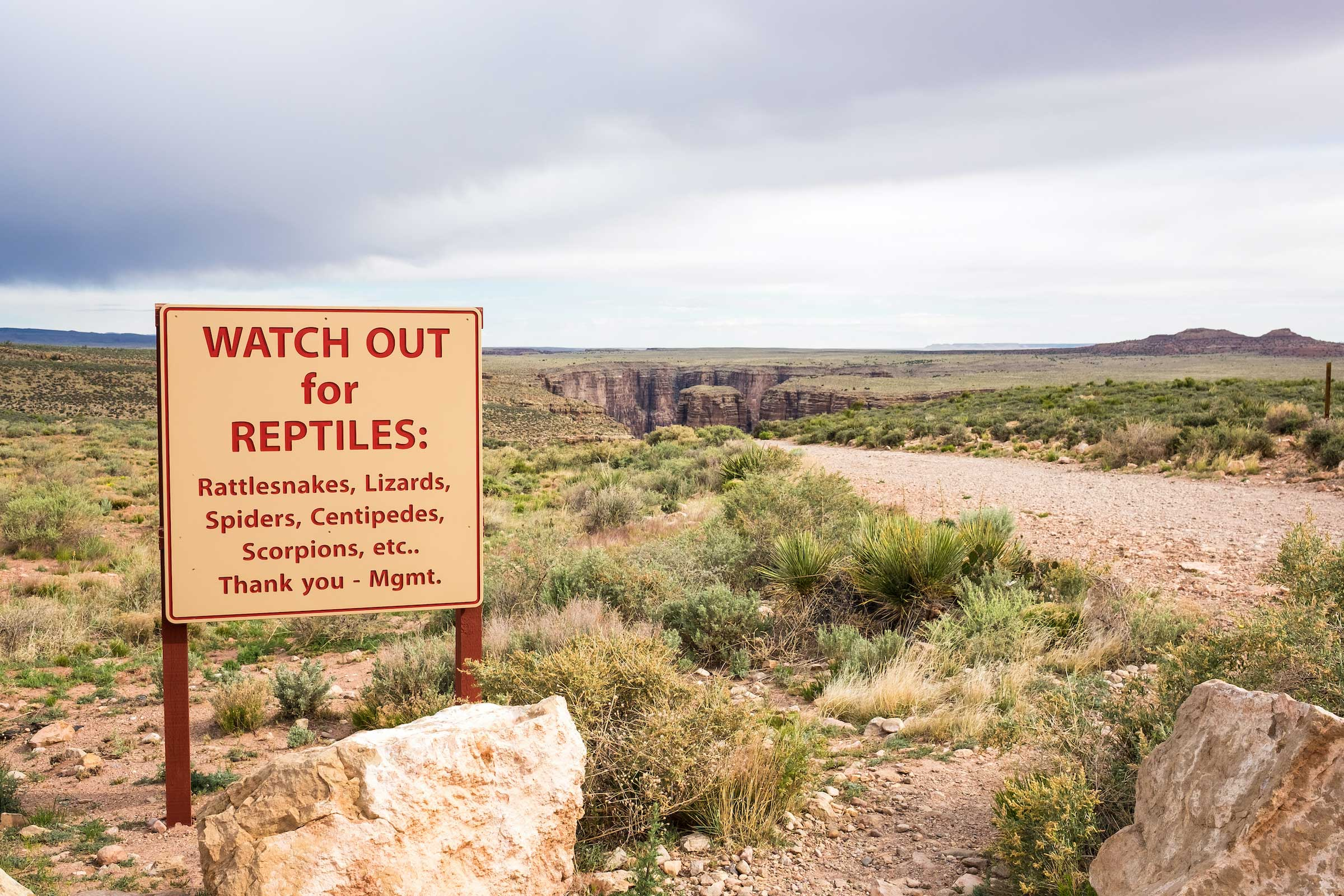 8 Tips to Keep You Safe from Snakes on the Trail